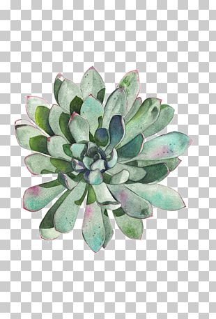 Paper Succulent Plant Watercolor Painting Printmaking Drawing PNG
