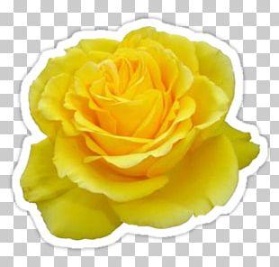 Rose Gardening Yellow Flower Desktop PNG