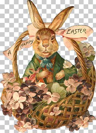 Easter Bunny Easter Basket Easter Postcard PNG