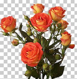 Bush Roses Flower PNG
