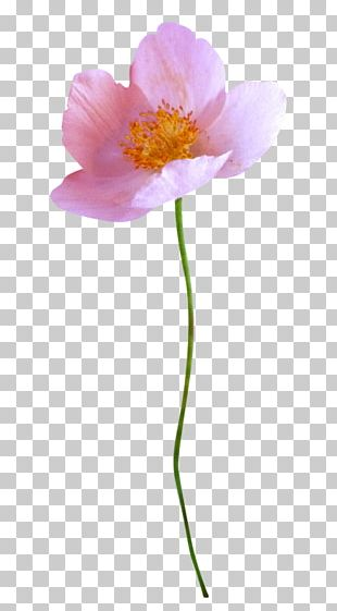 Painting Flower Advertising PNG