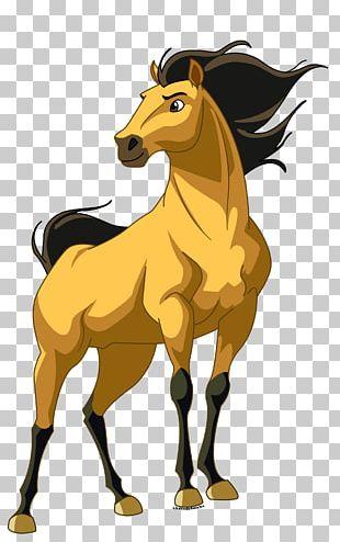 Horse DreamWorks Animation Film Spirit Drawing PNG