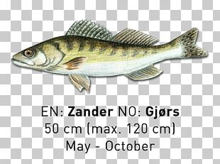 Sardine Fish Products Cod Salmon Oily Fish PNG