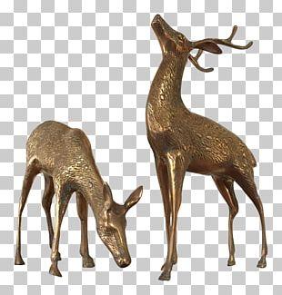 Elk White-tailed Deer Musk Deers Reindeer PNG