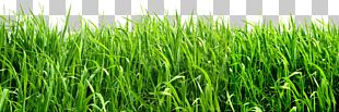 Image File Formats Grass Lawn PNG