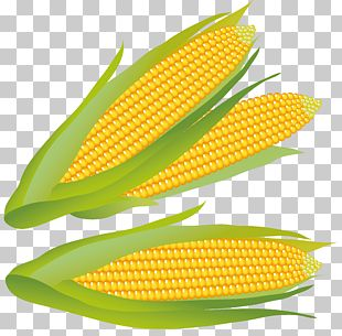 Maize PNG