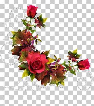 Cut Flowers Beach Rose Garden Roses PNG