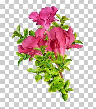 Damask Rose Flower Pink PNG