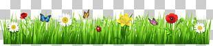 Tulip Meadow Grasses Wildflower PNG