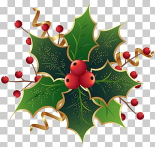 Christmas Eve At Friday Harbor Common Holly Mark Nagle The Ivy Green PNG