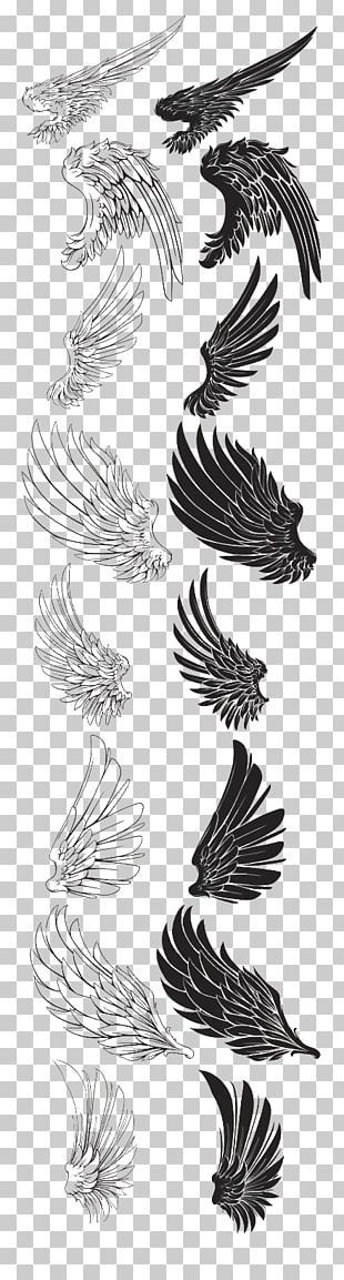 Drawing Brush Feather PNG