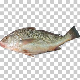 Tilapia Fish Products Northern Red Snapper PNG