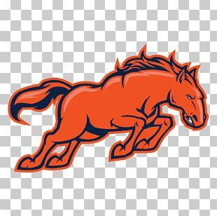 Denver Broncos New England Patriots New York Jets NFL Head Coach PNG