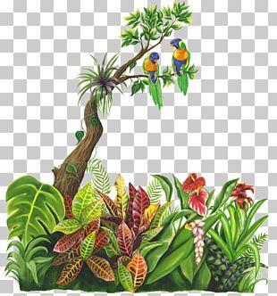 Jungle Tropical Rainforest PNG