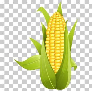 Corn On The Cob Maize Sweet Corn PNG