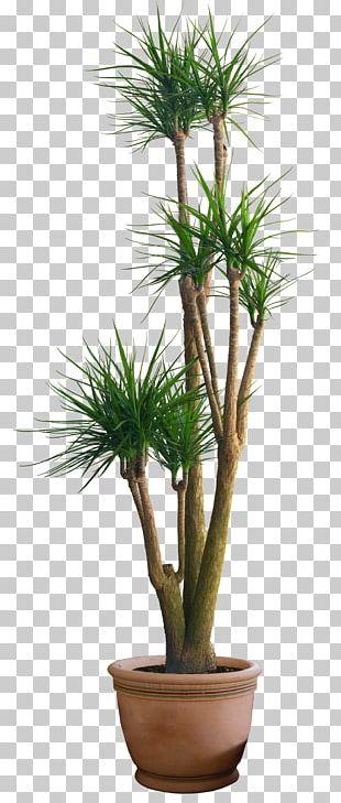 Pine Plant Flowerpot PNG