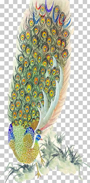Bird Peafowl Feather Painting PNG
