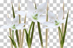 Floristry Cut Flowers Petal Plant Stem Flowerpot PNG