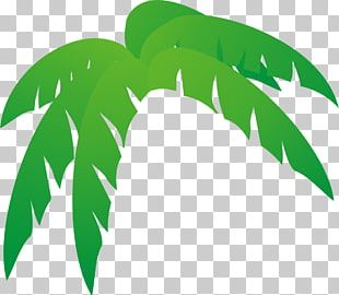 Arecaceae Leaf Tree Palm Branch PNG