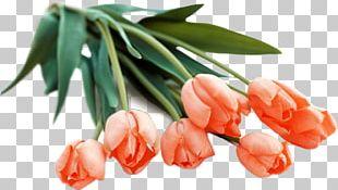 Flower Bouquet Tulip Orange PNG