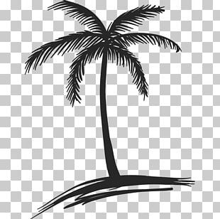Drawing Coconut Arecaceae Tree Watercolor Painting PNG