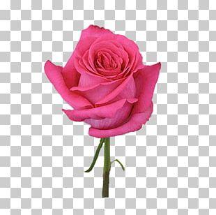 Pink Flowers Rose Dress Color PNG