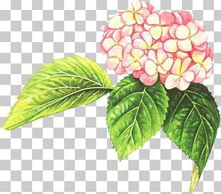Watercolor Painting Leaf Petal Flower PNG