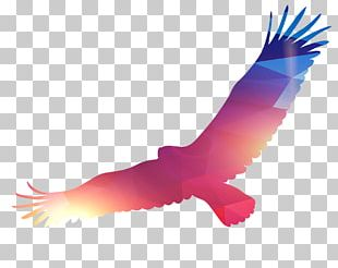 Eagle Bird PNG