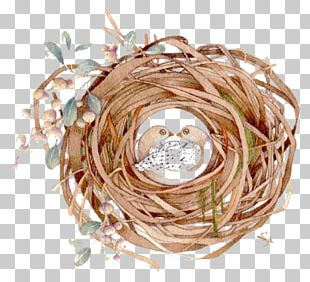 Bird Nest Watercolor Painting PNG