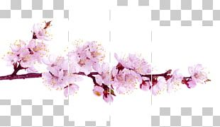 Blossom Stock Photography Stock.xchng Flower PNG