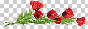 Flower Red Tulip PNG