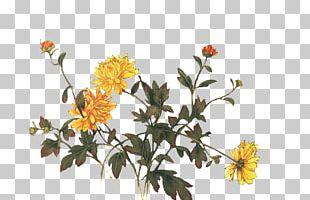 Chrysanthemum Indicum Chrysanthemum Tea Floral Design Flower PNG
