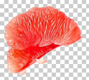 Grapefruit Juice Red Meat Pomelo PNG