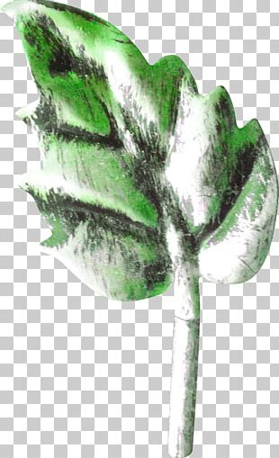 Maple Leaf Plant Stem Google S PNG