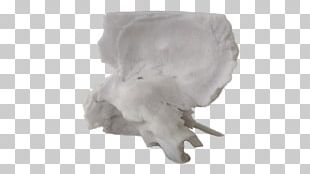 Jaw PNG