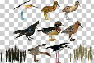 Zoo Tycoon 2 Duck Bird PNG