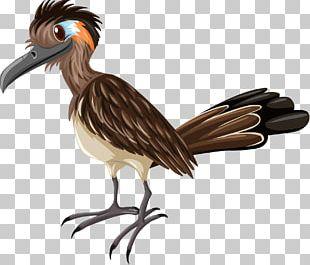 Woodpecker Bird PNG
