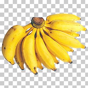 Dwarf Cavendish Banana Fruit Cooking Banana Lady Finger Banana PNG