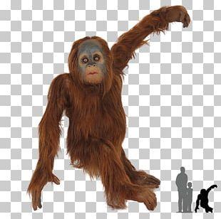 Chimpanzee Gorilla Bornean Orangutan Primate Sumatran Orangutan PNG