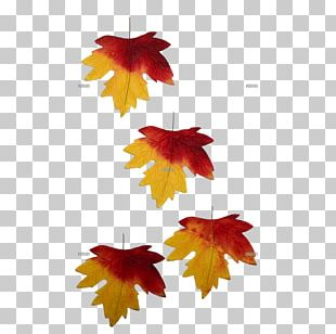 Autumn Leaf Color Autumn Leaf Color Petal Tendril PNG