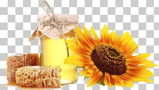 Honey Bee Honeycomb Vegetarian Cuisine PNG