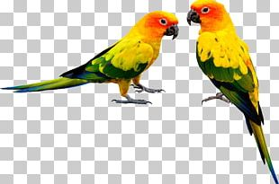 Parrot PNG