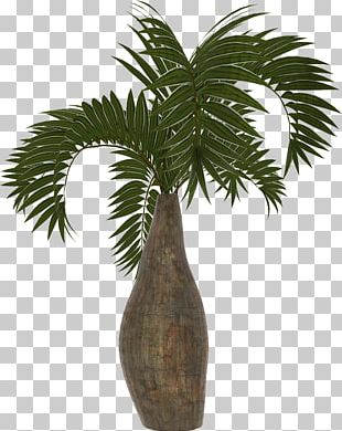 Arecaceae Asian Palmyra Palm Coconut Date Palm Plant PNG