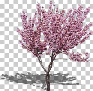 Cherry Blossom Peach Tree PNG