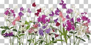 Flower Design Living Room Ornamental Plant PNG
