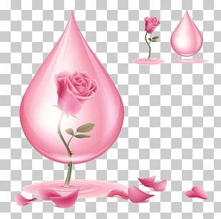 Beach Rose Flower Red Poppy PNG