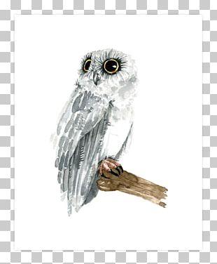Owl Hawk Beak Stock Photography Feather PNG