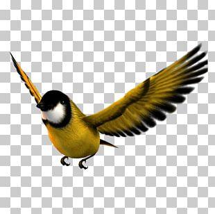 Bird Flight Atlantic Canary Icon PNG