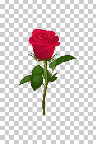 Centifolia Roses Art Emoji Garden Roses Soch Na Sake-Sab Tera PNG