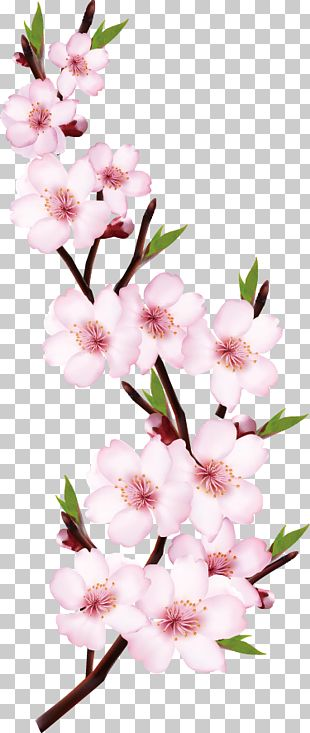Peach Flower Shoot PNG